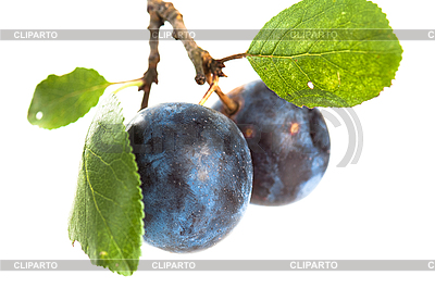 - 3133693-branch-with-two-ripe-plums