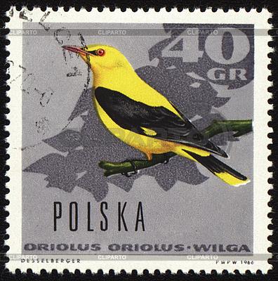 Oriole auf Briefmarke | Illustration mit hoher Auflösung |ID 3180968