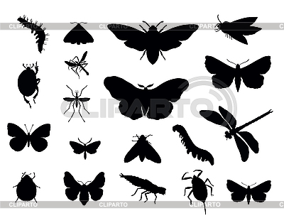 Set von Insekten | Stock Vektorgrafik |ID 3142375