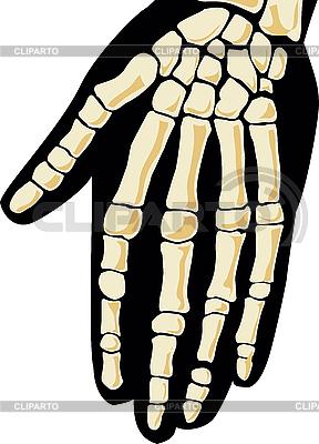 Ludzki szkielet. Ręka | Klipart wektorowy |ID 3160751
