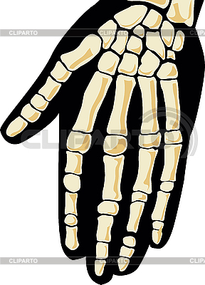 Menschliches Skelett. Hand | Stock Vektorgrafik |ID 3160751
