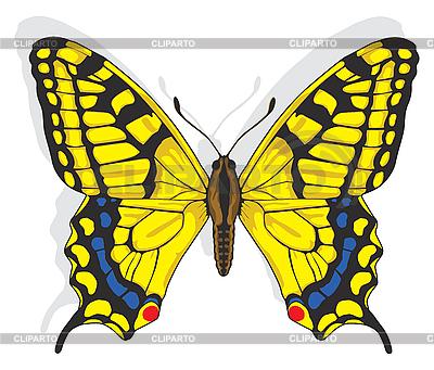 Schwalbenschwanz-Schmetterling | Stock Vektorgrafik |ID 3168664