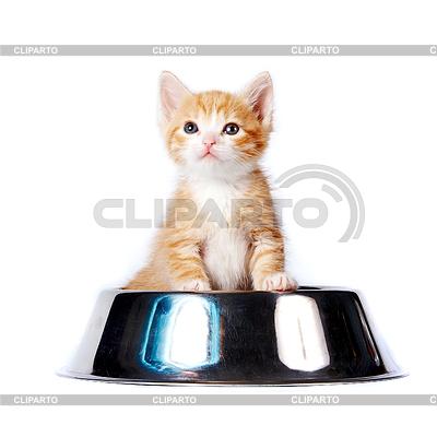 Фото маленьких котят 40 фотографий