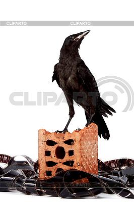 http://img.cliparto.com/pic/xl/189906/3296772-black-bird-on-brick-fragment-in-heap-of-film.jpg