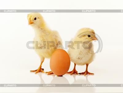 Zwei neugeborene Küken mit Ei | Foto mit hoher Auflösung |ID 3230208