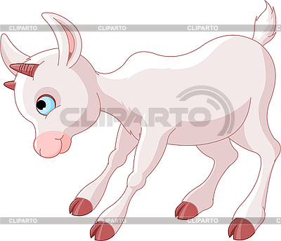 фото коза белая