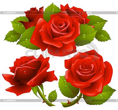 Red roses | Klipart wektorowy |ID 3199599