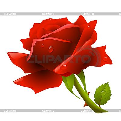Czerwona róża | Klipart wektorowy |ID 3200754