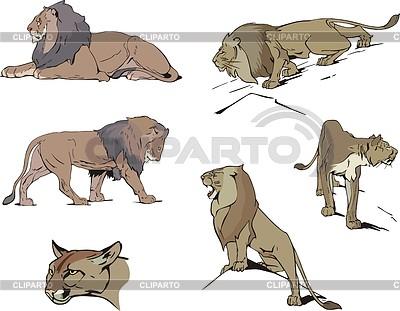 Set von Löwen | Stock Vektorgrafik |ID 3349787
