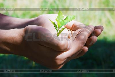 Kleiner Baum in die Hände | Foto mit hoher Auflösung |ID 3222058