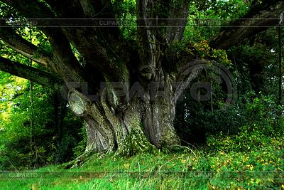 Giant Drzewo | Foto stockowe wysokiej rozdzielczości |ID 3232906