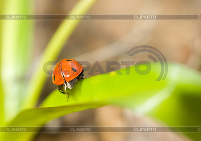 Ladybird on grass | High resolution stock photo |ID 3237986