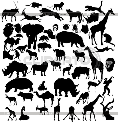 Zestaw zwierząt afrykańskich i tropikalnych | Klipart wektorowy |ID 3234793