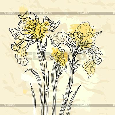 Iris-Blumen   Stock Vektorgrafik  ID 3351018