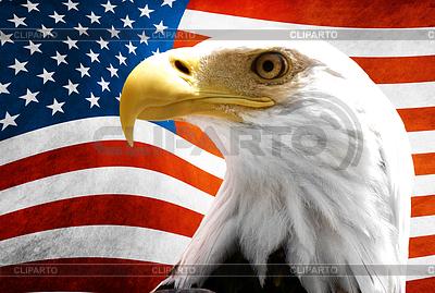Орел на фоне американского флага | Фото большого размера |ID 3314607