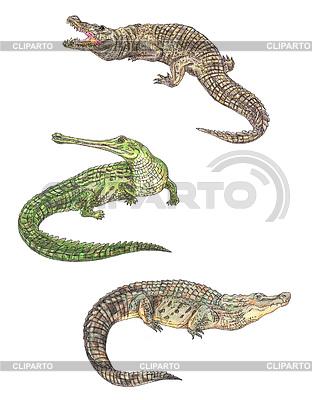 Alligator Coloring Page  crayolacom