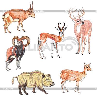 Zwierząt kopytnych | Stockowa ilustracja wysokiej rozdzielczości |ID 3348257