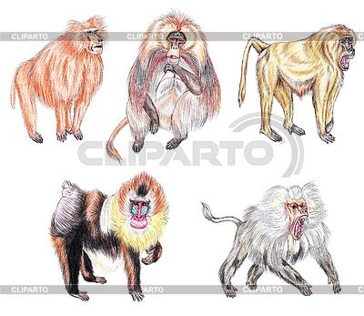 Babuinos, mandriles gelada y | Ilustración de alta resolución |ID 3348887