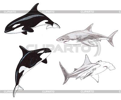 상어와 범고래 | 높은 해상도 그림 |ID 3349184