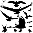 Vector clipart: birds silhouettes
