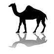 Vector clipart: camel isolated on white
