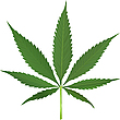 Vector clipart: cannabis leaf