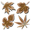 Vector clipart: dry leaves collection against white