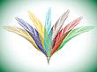 Векторный клипарт: цветные перья веером