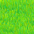 Vector clipart: fresh grass texture