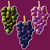 Vector clipart: grapes clusters