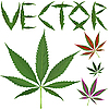 Vector clipart: marijuana leaves