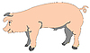Vector clipart: cartoon of pig