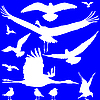 Vector clipart: white birds silhouettes over blue