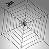 Vector clipart: spider, fly and web