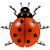 Ladybug against white | Stock Vector Graphics