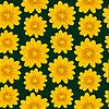 Векторный клипарт: желтым рисунком ромашки