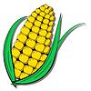 Векторный клипарт: Кукуруза