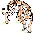 Vector clipart: Tiger