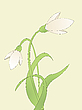 Vector clipart: common snowdrop