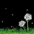 Векторный клипарт: Одуванчики и трава в ночи