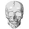 Vector clipart: human skull