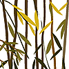 Vector clipart: Willow