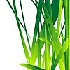 Vector clipart: Fresh grass