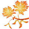 Vector clipart: Maple tree seeds