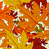 Vector clipart: Autumn background of maple leaves