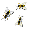 Vector clipart: three wasps