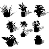 Vector clipart: Potted plants