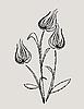 Векторный клипарт: абстрактный дизайн тюльпан