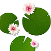 Vector clipart: Pink lotus