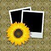 Vector clipart: Photo frames with sunflower